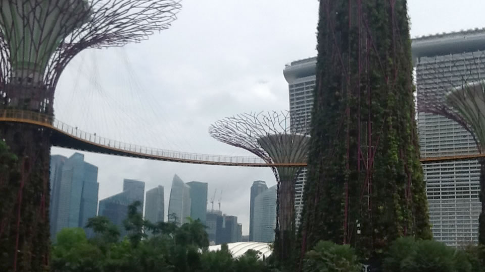 Supertree Grove, Singapore.